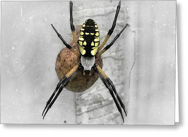 Garden Spider Greeting Card by Amber Flowers