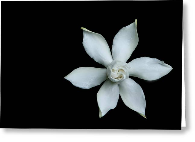 Gardenia Greeting Cards - Gardenia I Greeting Card by David Paul Murray