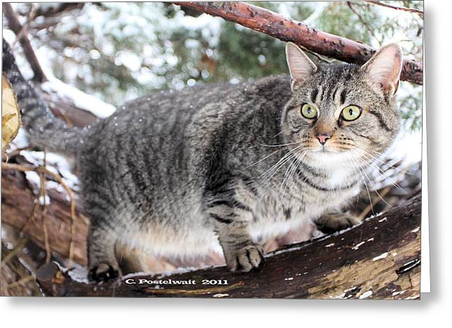 Garfield County Greeting Cards - Garfield in a Pine Tree Greeting Card by Carolyn Postelwait