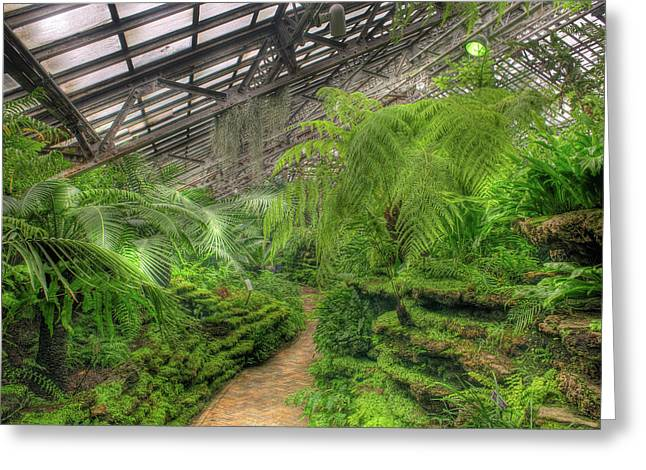 Garfield Greeting Cards - Garfield Park Conservatory Path Chicago Greeting Card by Steve Gadomski