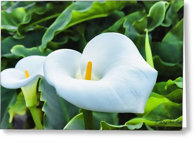 Big Sur Greeting Cards - Garrapata Beach Calla Lily Pair Greeting Card by Doug Holck