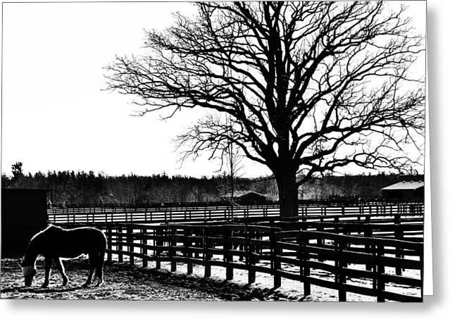 Silhouettes Of Horses Greeting Cards - Gated Pastures Greeting Card by Karl Anderson