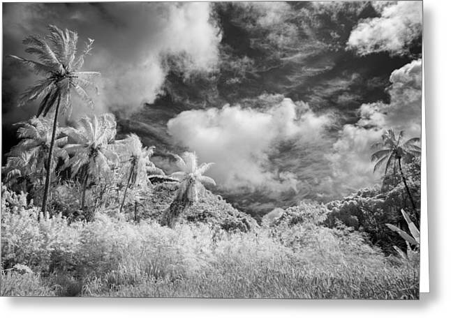 Infrared Fine Art Greeting Cards - Gathered Today Greeting Card by Jon Glaser