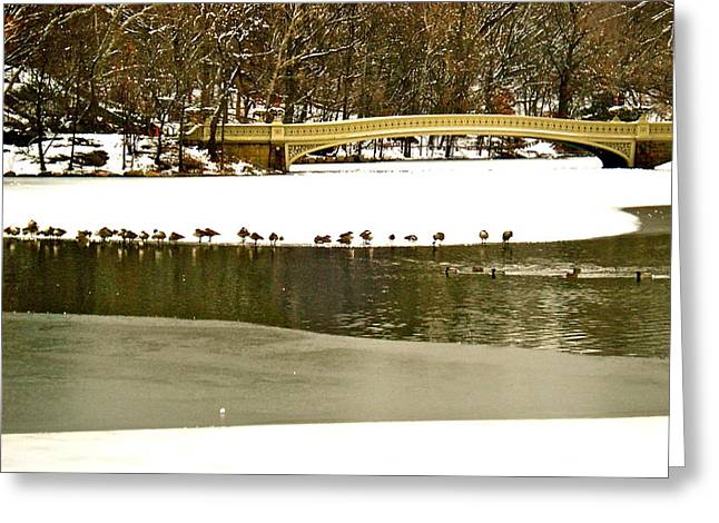 Felix Zapata Greeting Cards - Gathering of ducks Greeting Card by Felix Zapata