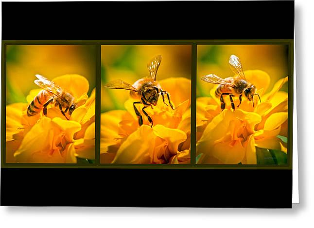 Honeybee Greeting Cards - Gathering Pollen Triptych Greeting Card by Bob Orsillo