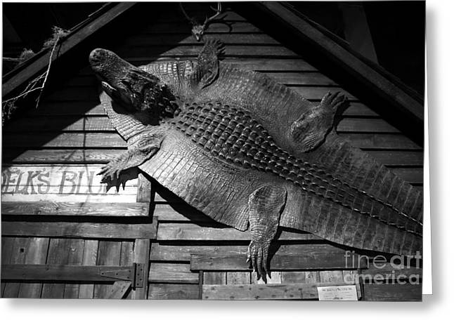 Hunting Cabin Greeting Cards - Gator Hide Greeting Card by David Lee Thompson
