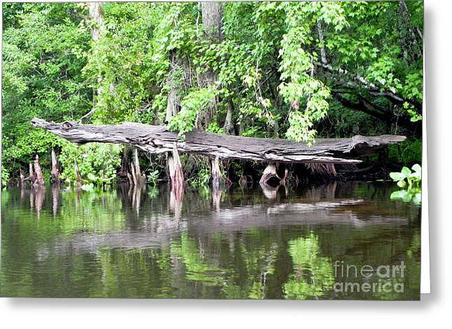 Gator Stump Greeting Card by Jack Norton
