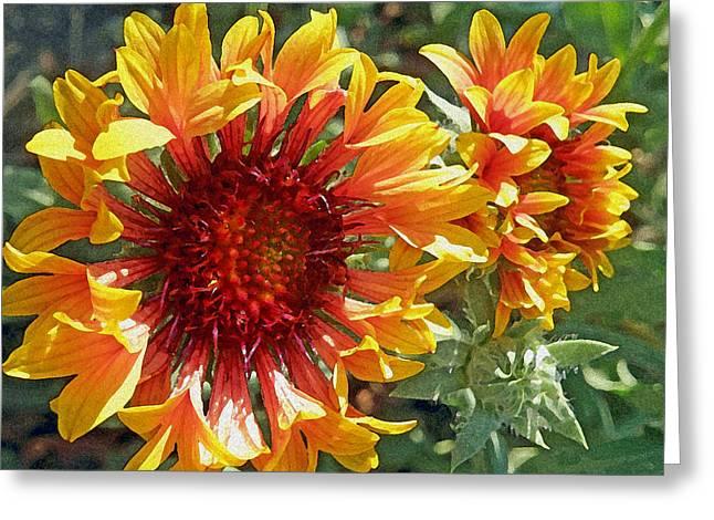 Yellow Sunflower Greeting Cards - Gazanias Greeting Card by Jean Hall