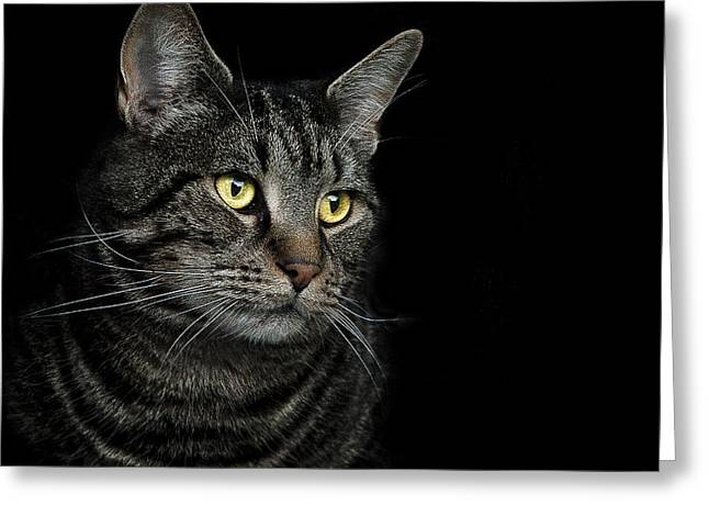 Cat Portraits Greeting Cards - Gaze  Greeting Card by Paul Neville