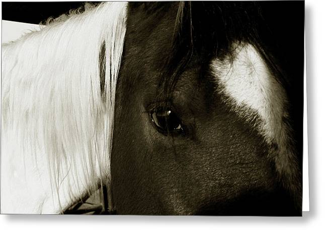 Ranch Life Greeting Cards - Gaze  Greeting Card by Toni Hopper