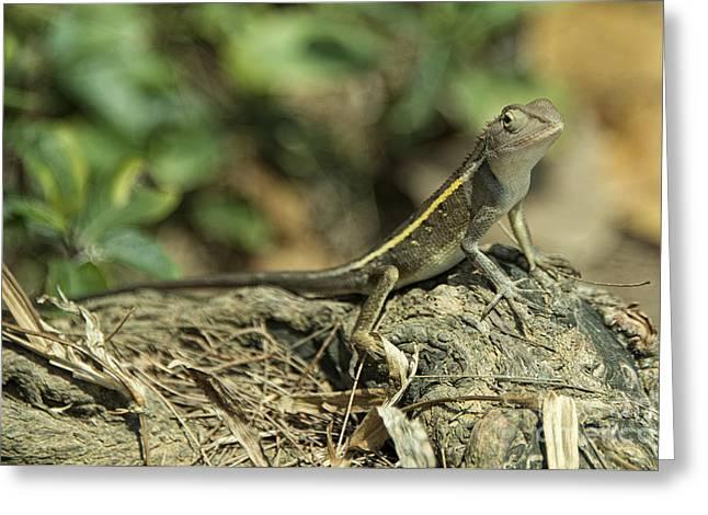 Angthong Greeting Cards - Gecko  Greeting Card by Rob Hawkins