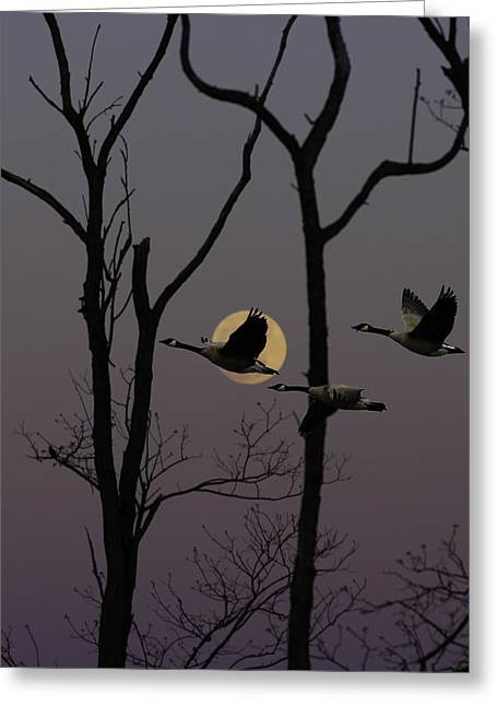 Brown Towhee Greeting Cards - Geese Flying Past Moon Greeting Card by Ron Kruger