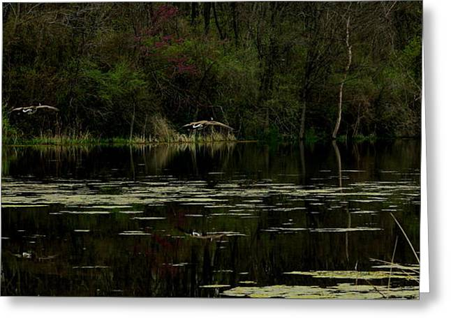 Pond In Park Greeting Cards - Geese Landing by Earls Photography Greeting Card by Earl  Eells a