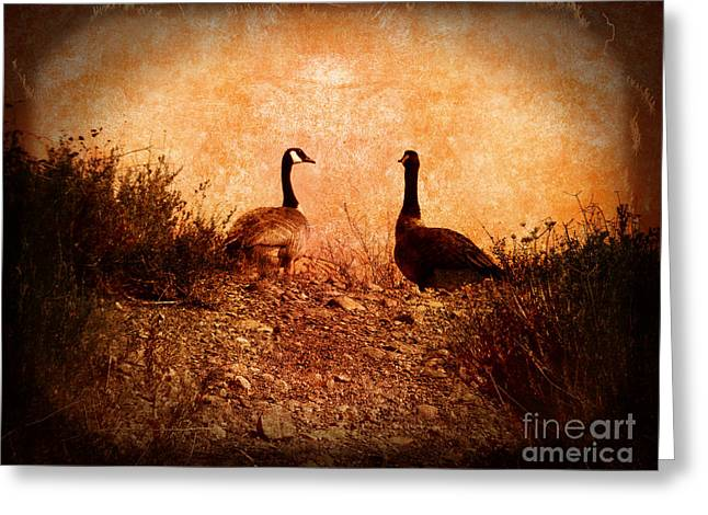 Gato Greeting Cards - Geese on a Hill Greeting Card by Laura Iverson