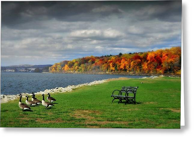 Geese On The Hudson Greeting Card by Diana Angstadt