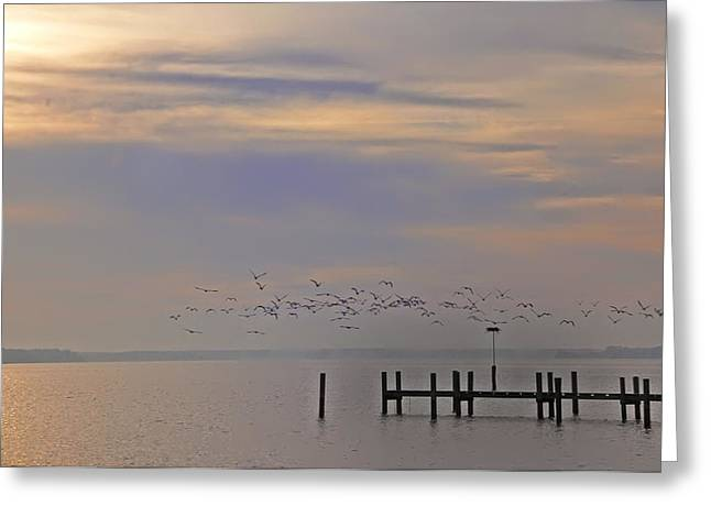 Geese Over The Chesapeake Greeting Card by Bill Cannon