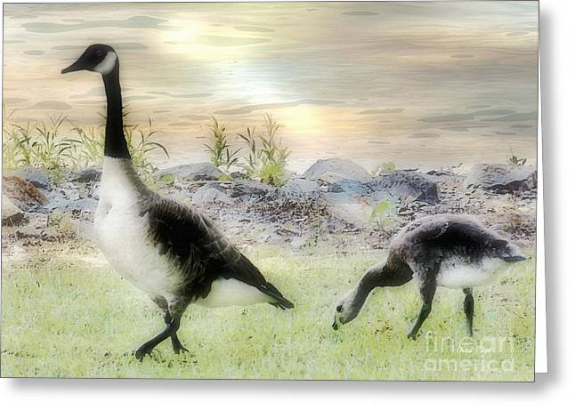 Mother Goose Greeting Cards - Geese Peace Greeting Card by Anita Faye