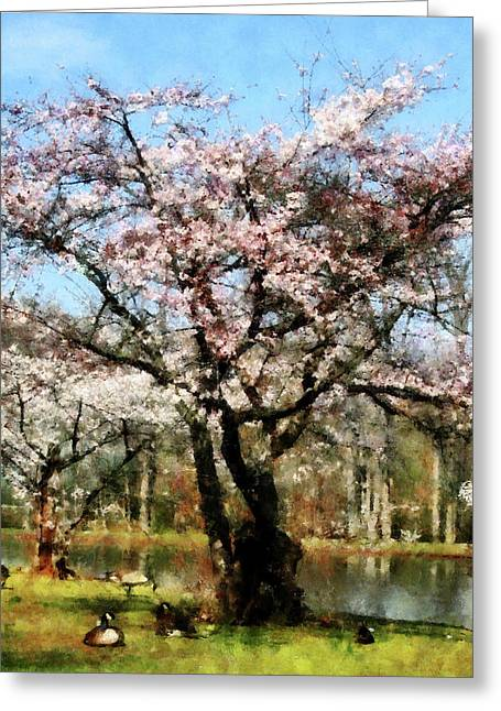 Flowering Trees Greeting Cards - Geese Under Flowering Tree Greeting Card by Susan Savad