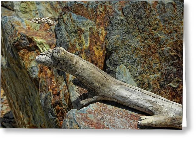 Wood Sculpture Greeting Cards - Gekko Greeting Card by Donna Blackhall
