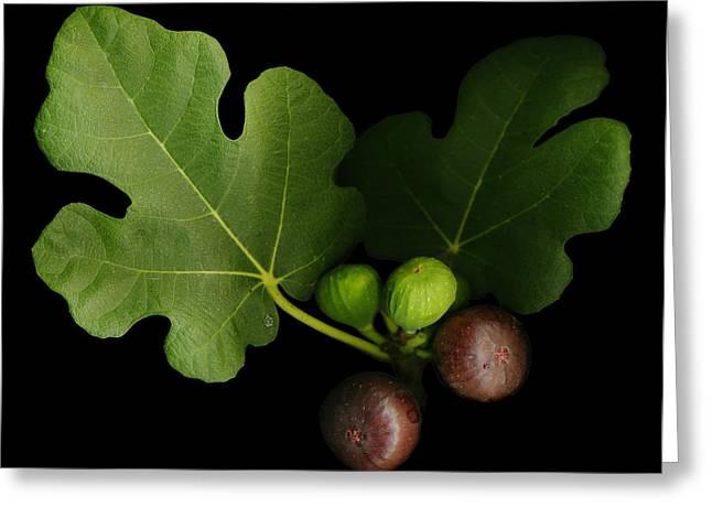 Figs Digital Art Greeting Cards - Gelinis Fig Tree Greeting Card by Deborah J Humphries