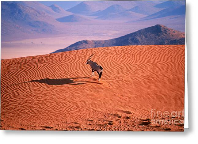 Desert Greeting Cards - Gemsbok Greeting Card by Eric Hosking and Photo Researchers