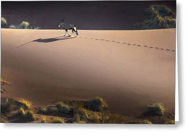 Animal Tracks Greeting Cards - Gemsbok Oryx Gazella On Red Dunes Greeting Card by Panoramic Images