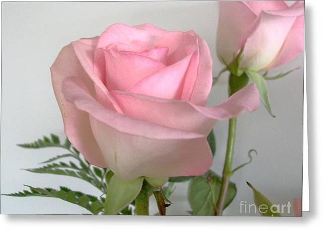 Gentle Pink Greeting Card by Marsha Heiken