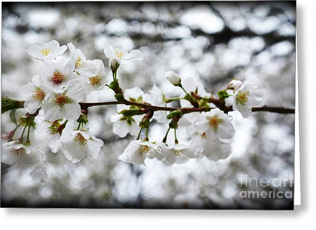 Gentle Purity Greeting Card by Eva Thomas