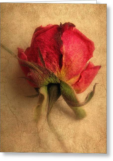 Texture Flower Greeting Cards - Gentle Rose Greeting Card by Jessica Jenney