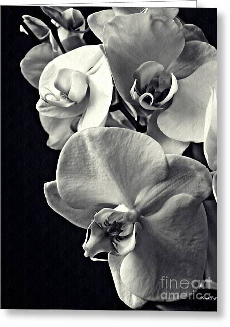 Gentle Silence Monachrome Greeting Card by Sarah Loft