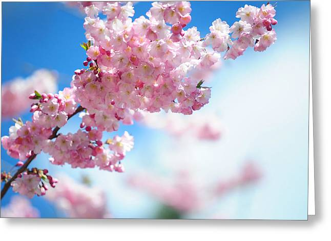 Pink Flower Branch Greeting Cards - Gentle Spring Arrival Greeting Card by Jenny Rainbow