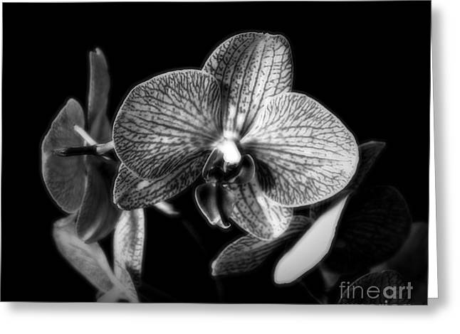 Gently In Monochrome Greeting Card by Chalet Roome-Rigdon