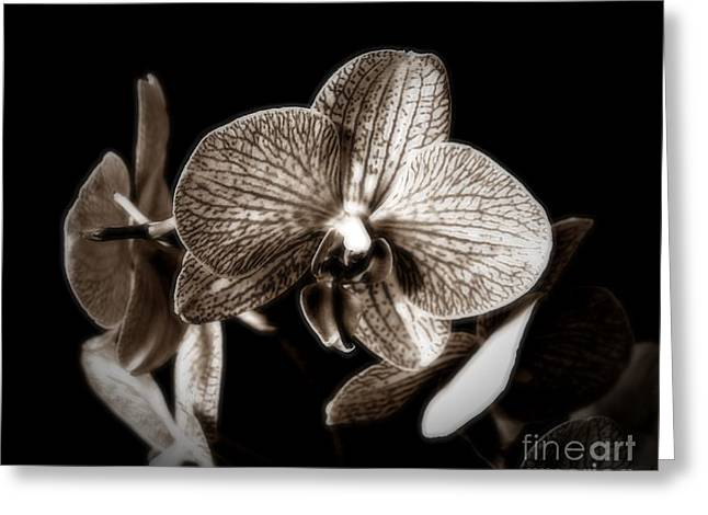 Gently In Sepia Greeting Card by Chalet Roome-Rigdon