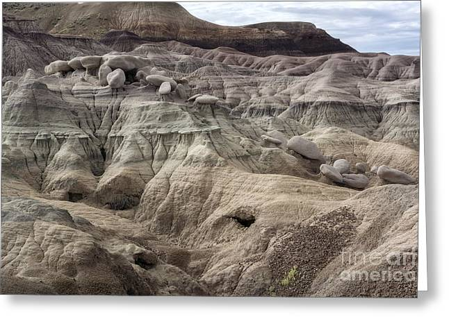 Petrified Forest Arizona Greeting Cards - Geology Lesson 2 Greeting Card by Melany Sarafis