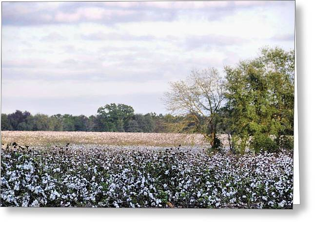 Georgia Cotton Fields Greeting Cards - Georgia Cotton Greeting Card by Jan Amiss Photography