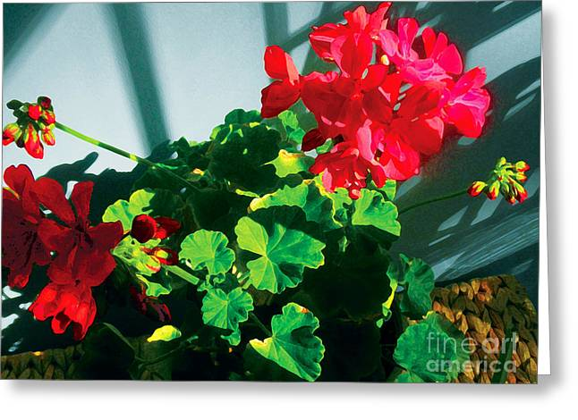 Red Geraniums Greeting Cards - Geranium Greeting Card by David Klaboe