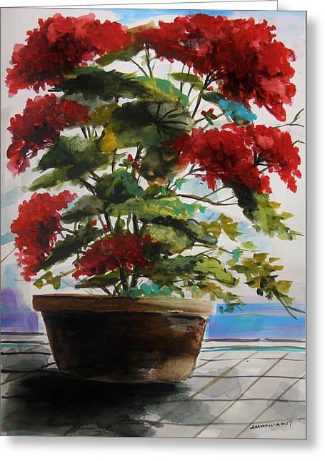 Red Geraniums Drawings Greeting Cards - Geranium in June Greeting Card by John  Williams