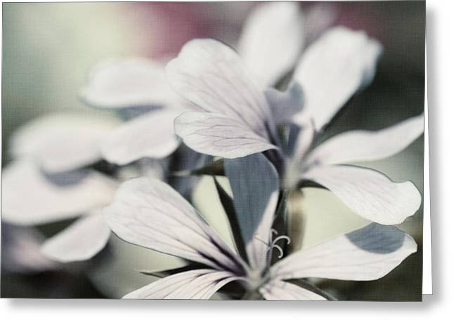 Geranium Flower Close Up Greeting Cards - Geranium Greeting Card by Mandy Tabatt