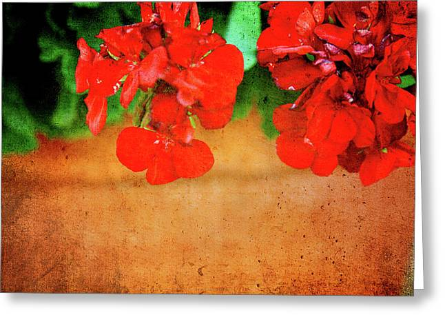 Large Poster Greeting Cards - Geranium summer Greeting Card by Toni Hopper