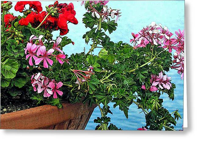 Abstract Digital Photographs Greeting Cards - Geraniums by the Sea Greeting Card by Jean Hall