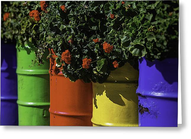 Planter Greeting Cards - Geraniums In Colorful Barrels Greeting Card by Garry Gay