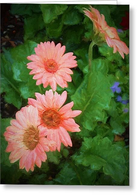 Barberton Daisy Greeting Cards - Gerber Daisies - digital art Greeting Card by TN Fairey