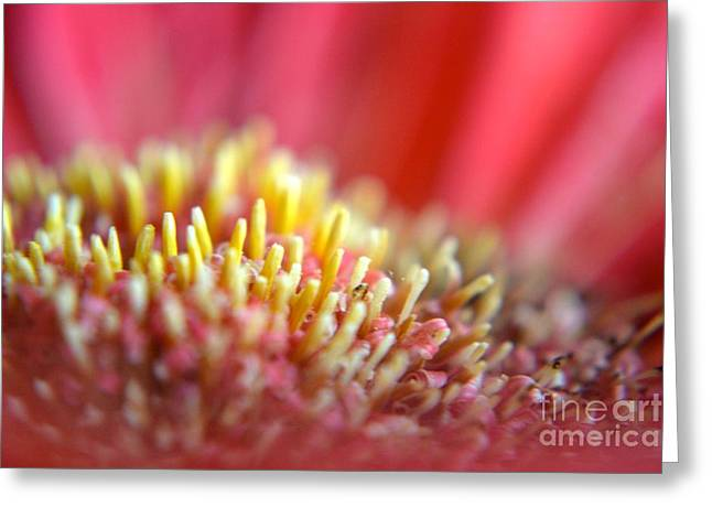 Nature Center Greeting Cards - Gerbera Daisy  Greeting Card by Cindy Nearing