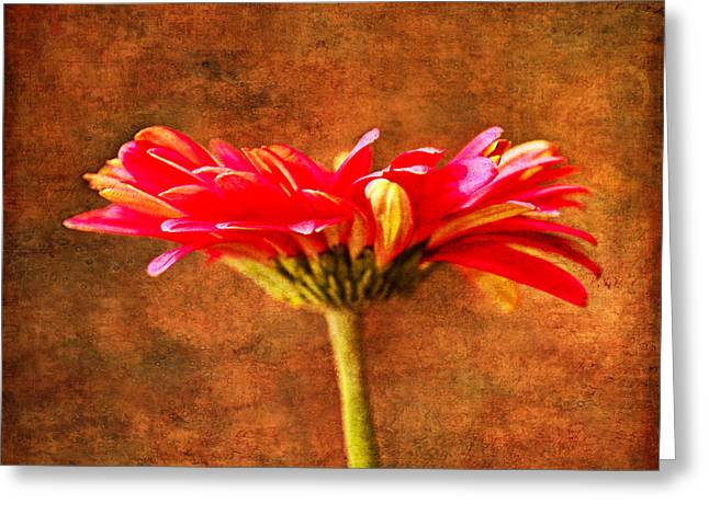 Shades Of Red Greeting Cards - Gerbera Daisy In Fall Greeting Card by Sandi OReilly