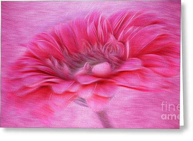 Layers Greeting Cards - Gerbera in the Breeze Greeting Card by Clare Bevan