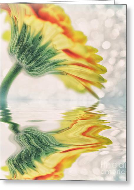Gerbera In Water With Bokeh Greeting Card by SK Pfphotography