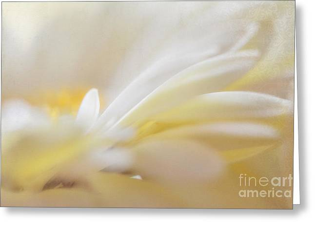 Gerbera Light Greeting Card by SK Pfphotography