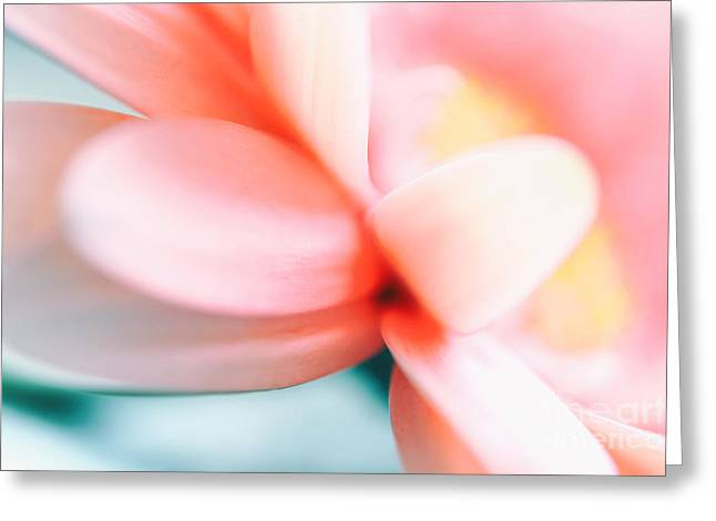 Gerbera Pastell Detail Greeting Card by SK Pfphotography