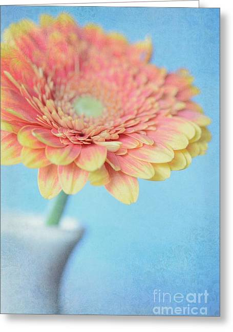 Flower Design Greeting Cards - Gerbera with blue background Greeting Card by SK Pfphotography