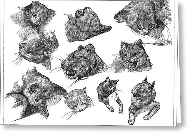 Gericault Greeting Cards - Gericault: Cats Greeting Card by Granger